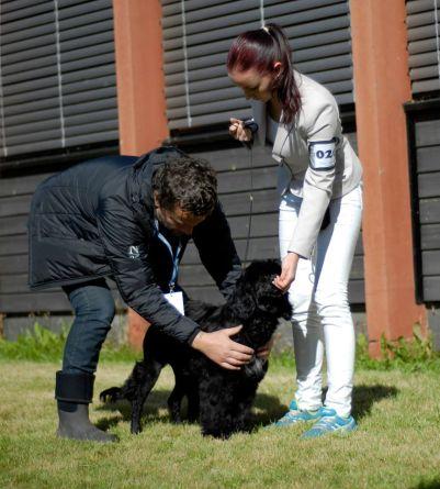 Frigg's first puppy show