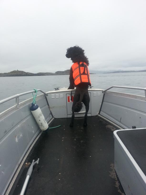 Frigg enjoying a day at the sea