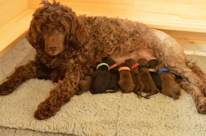 Vilje and her puppies